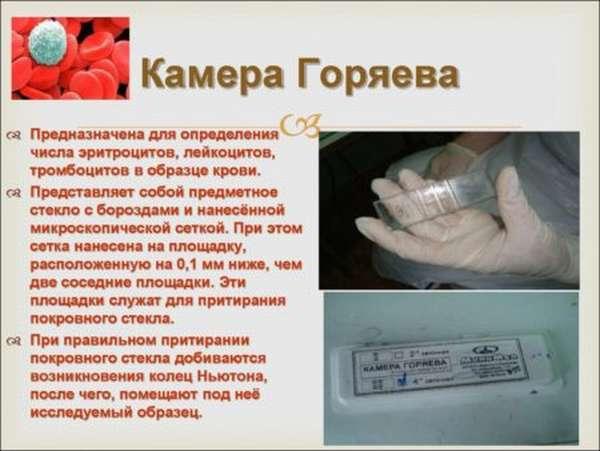 Методика подсчета лейкоцитов в камере Горяева, нормы показателей и отклонения
