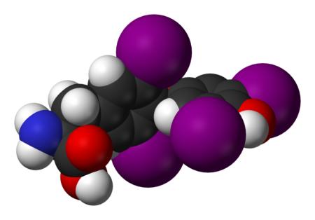 Причины повышения антител к ТПО, методы диагностики и коррекции их уровня