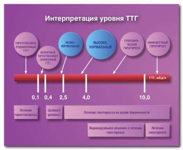Что необходимо знать про норму ТТГ в организме и его роль?