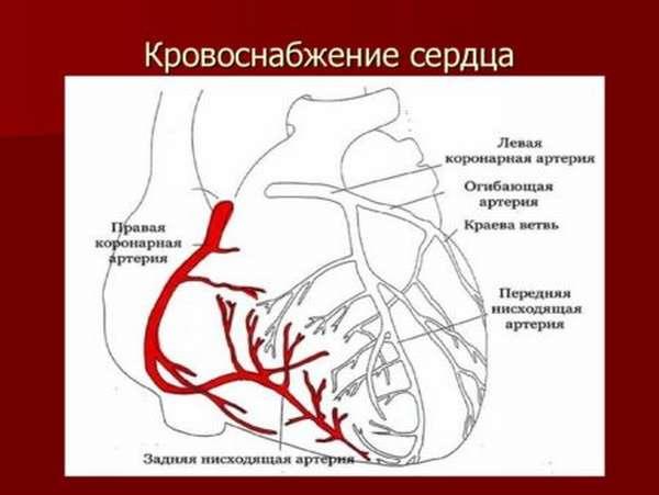 В чем опасность синдрома слабости синусового узла и как его лечить?