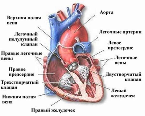 Симптомы правожелудочковой, левожелудочковой декомпенсированной сердечной недостаточности