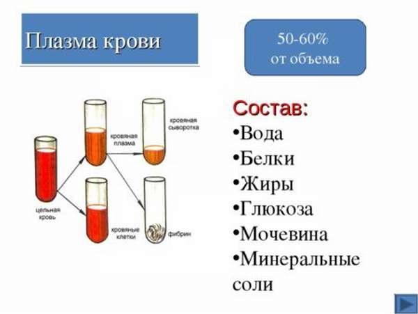 Состав и функции плазмы крови, о чем говорят отклонения показателей?