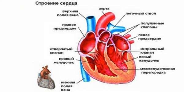 Особенности и оценка опасности для здоровья при регургитации на клапане легочной артерии 1 степени