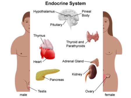 На какие гормоны нужно сдавать анализ крови при гормональном сбое: методы лечения
