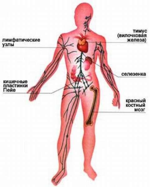 Насколько опасны пониженные лимфоциты в организме человека?