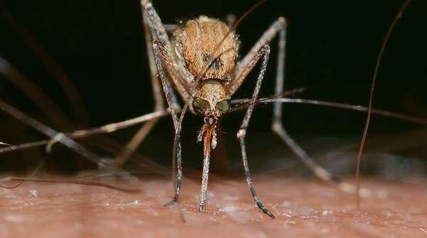 Передача комарами ВИЧ (миф)