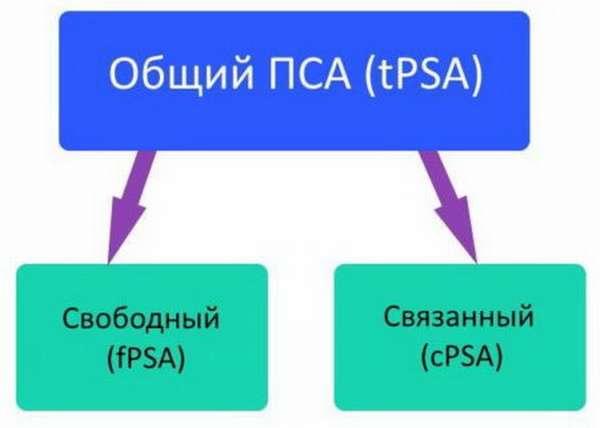 Как проводится сдача и расшифровка анализа ПСА? Определение нормальных показателей и отклонений