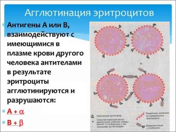 Причины агглютинации эритроцитов, ее виды и антиглобулиновый тест