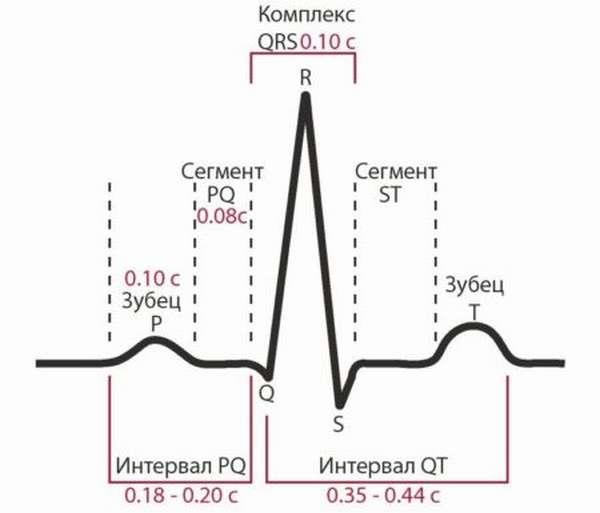 Что необходимо знать об интервале QT на ЭКГ, норме его длины и отклонениях от нее