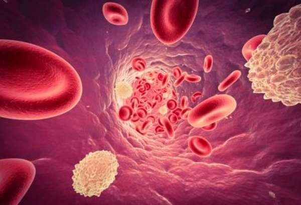 Что значит, понижение нейтрофилов и повышение лимфоцитов в организме человека?