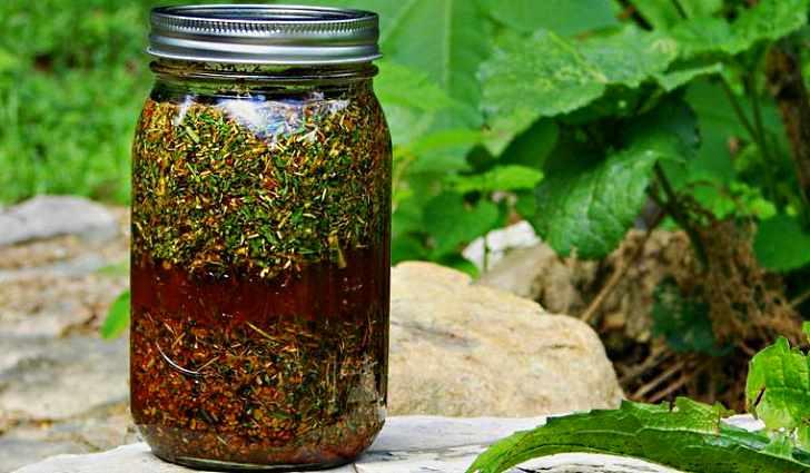 Этот рецепт особенно помогает в борьбе с листогрызущими гусеницами