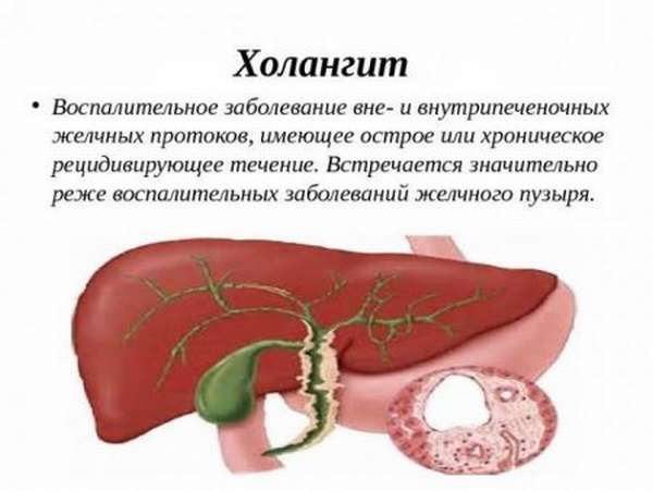 Нормы ГГТ в биохимических анализах крови у мужчин и женщин
