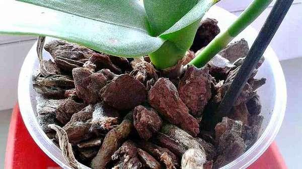 Кора сосны для орхидей