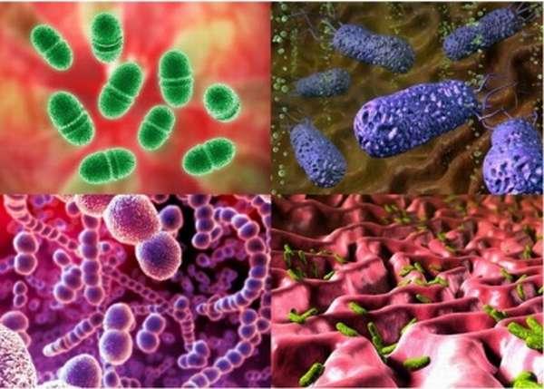 Восстановление микрофлоры пребиотиками