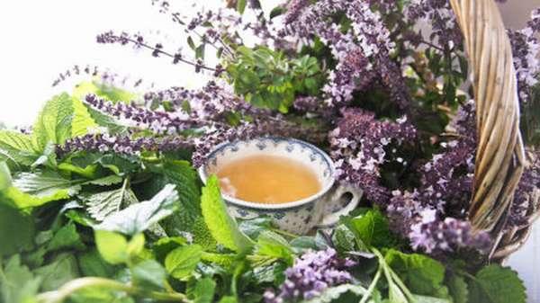 Эффективность употребления чаев на основе трав для улучшения работы сердца и укрепления сосудов