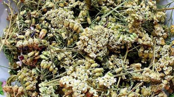Сушеные цветы тысячелистника