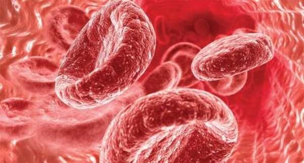 Что показывает изучение биохимического анализа крови? Как правильно подготовиться?