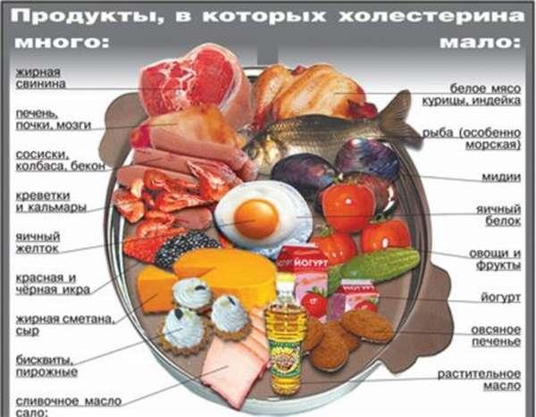 Значение и роль липопротеидов в работе органов и систем человека