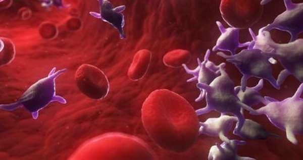 Чем опасны пониженные тромбоциты у ребенка, нормы, симптомы при понижении показателей, причины понижения и в чем опасность?