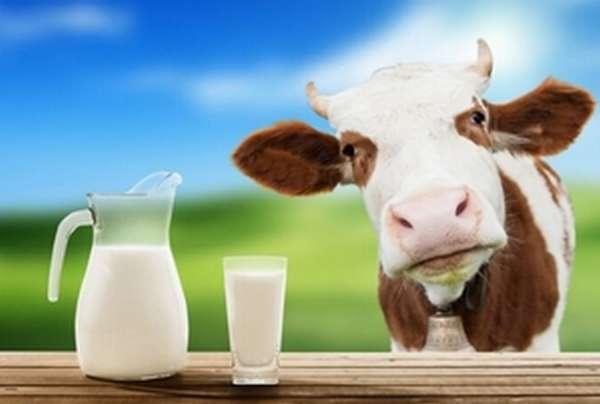 Профилактика отравления молоко