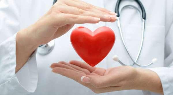 Польза боярышника для сердца и сосудов, особенности применения при разных заболеваниях