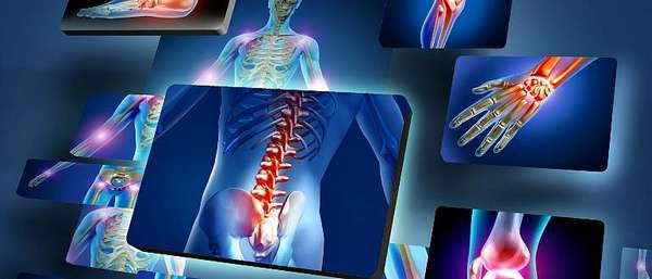 Кости и суставы в человеческом организме