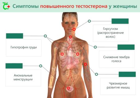 Показания к анализу на тестостерон у женщин, нормы и отклонения, причины и симптомы