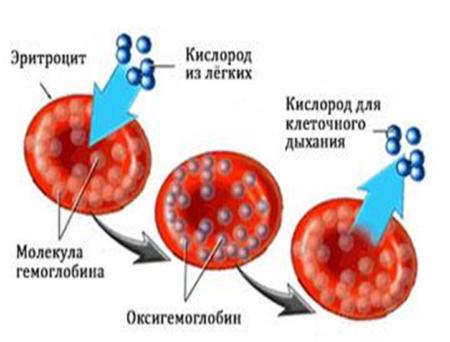Что надо знать о том, как обозначаются показатели гемоглобина в анализе крови человека?