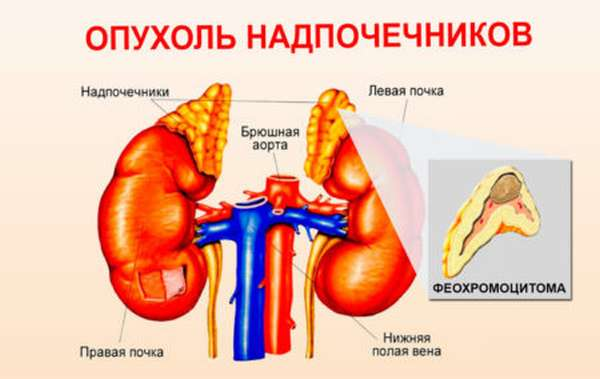 Проведение анализа на адреналин в крови, причины назначения и нормы