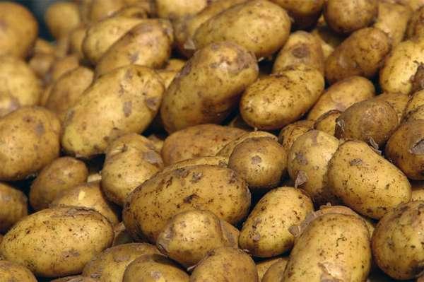 Что такое картофель?