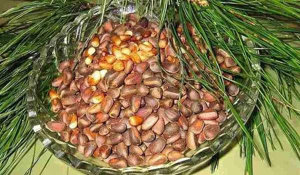 Правила очищения и хранения кедровых орехов