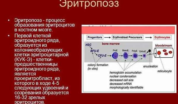 Производство клеток крови - как это начать?