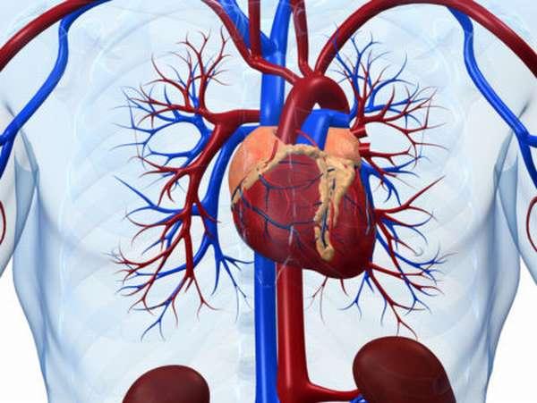 Основные симптомы и характеристика постмиокардического кардиосклероза