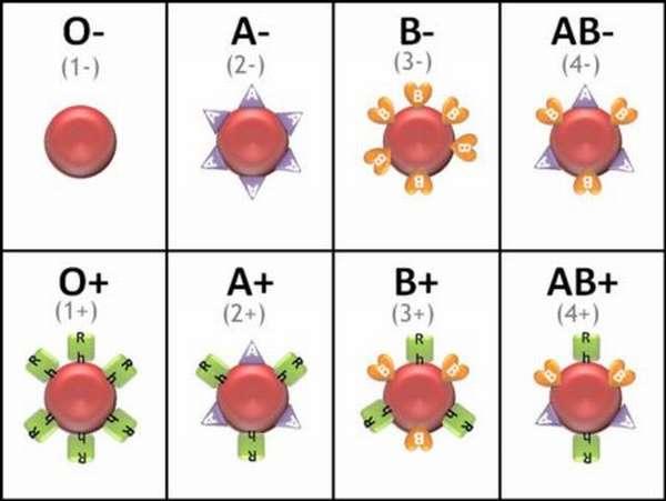 Что необходимо знать о совместимости характеров людей по группе крови?