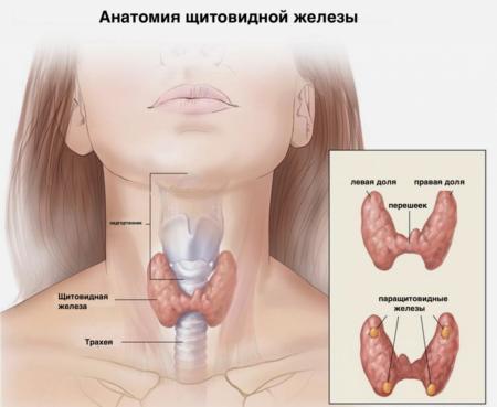 Какой должна быть подготовка к сдаче крови на анализ гормонов щитовидной железы?