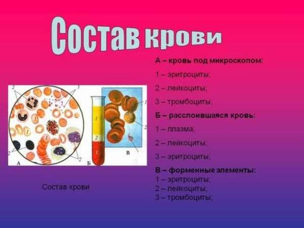 Причины понижения уровня лейкоцитов в крови, симптоматика состояния и лечение