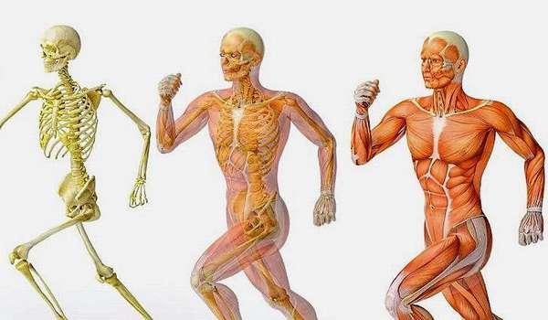 Как лечить заболевания костно-мышечной системы. Рекомендации специалиста