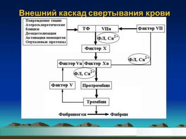Физиология механизма свёртывания крови при повреждении сосудистой системы организма